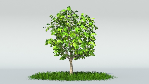 Chestnut tree render